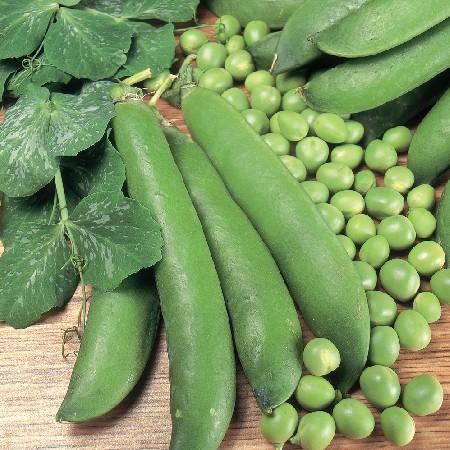 Feltham-first-peas