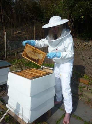 Bf beekeeping 2