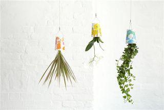 Boskke usd plants