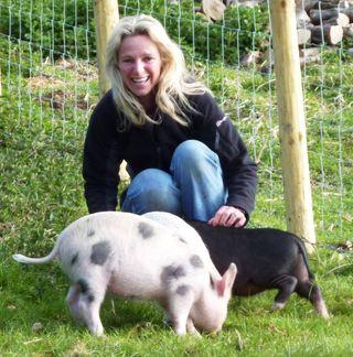 Pig crop