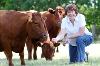 Pam with some of her Dexter cattle August 2011 web